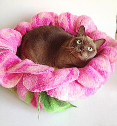 BED: Felted Pet Beds and Caves for Cats Offering Modern Accessories for Eco Friendly Decorating