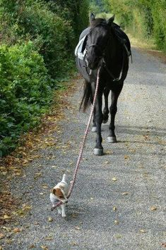 Dog walking the Horse