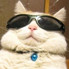 cats with glasses cats with glasses cats with glasses Cute Animal Memes, Cute Funny Animals, Funny Animal Pictures, Cute Baby Animals, Funny Cats, Smiling Animals, Nocturnal Animals, Arctic Animals, Jungle Animals