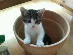 Ben in a pot