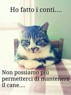 Vignette con i Gatti per Whatsapp - IMG Animals And Pets, Funny Animals, Cute Animals, I Love Cats, Crazy Cats, Funny Images, Funny Photos, Italian Memes, Cat Memes