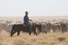 Mustering cattle of one of the two properties in the Sidney Kidman cattle station empire which bidders from around the world have express interest in buying when it finally goes up for sale in August
