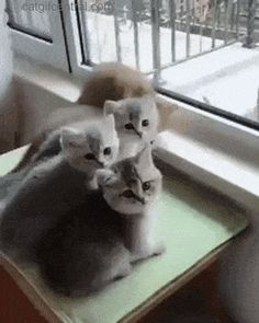 Cat GIF Central — Kittens in the Window