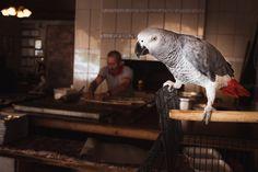 African grey parrot in Turkey [OS][850x567] - http://ift.tt/2dMxnBy