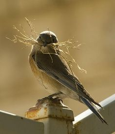 Nest-building time :-) Loveeeeeee