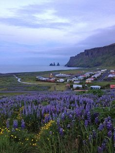 Vík, Iceland- this place is one of the most beautiful towns I've ever seen. It's honestly like driving through a post card. Places To Travel, Places To See, Beautiful World, Beautiful Places, Travel Around The World, Around The Worlds, Iceland Island, Iceland Landscape, Photos Voyages
