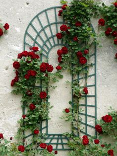 Rose inspiration from Loire Valley - L' Essenziale English Tea Roses, Victorian Terrace House, Rose Vines, Bonsai Plants, Climbing Roses, Love Rose, Beauty And The Beast, Shrubs, Living Room Designs