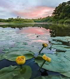 River tale by Andrew Ignatov on Beyond The Horizon, Water Lilies, Wonderful Places, Nature, Art Drawings, Golf Courses, To Go, Sky, River
