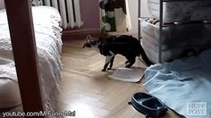 These cat fails are hilarious! Cats are not as graceful as you thought.