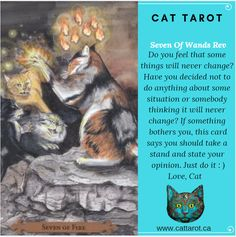 Monthly readings on my YouTube channel: www.youtube.com/c/cattarot Book your reading: www.cattarot.ca Love, Cat #tarot #tarotcards Never Change, Do You Feel, Do Anything, Tarot Cards, Things To Think About, Channel, Take That, Feelings, Sayings