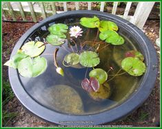 How to have a water garden in a container. All Things Plants