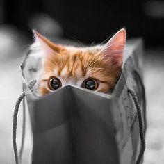 Miau 007 de fofura em missão nada secreta