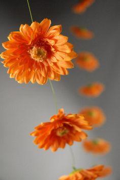 gerber daisy garland