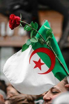Palestine Flag, Cool Photos, Beautiful Pictures, Islamic World, Photos Tumblr, Little Girl Dresses, Photo Art, Christmas Bulbs, Africa