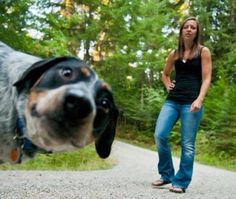 Get a Free Consultation for your #dog from our Friends at Nature's Select http://naturalpetfooddelivery.com/nsd/usa/free-consultation/ #photobomber