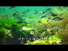 金子みすゞSMC No.68 お魚