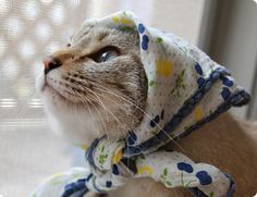 Babushka kitty