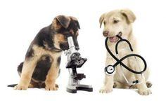 Il calendario dei vaccini del cane ed il nuovo per la Leishmaniosi Un comodo calendario per conoscere i vaccini obbligatori e non, da fare al tuo cucciolo di cane e soprattutto quando farli. E se hai appena preso un cane adulto? Ecco alcuni vaccini fondamentali per #vaccinicani #leptospirosi #leishmaniosi