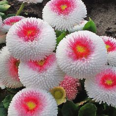 57 Stunning Unique Flowers To Look At - Awesome Indoor & Outdoor Strange Flowers, Unusual Flowers, Wonderful Flowers, Unusual Plants, Rare Flowers, Exotic Plants, Diy Flowers, Beautiful Flowers, Fleurs Diy