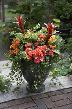Summery urn with bright bromeliads, begonias and scented geraniums.