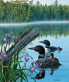 5982662510R:Loons in Summer Image Insert