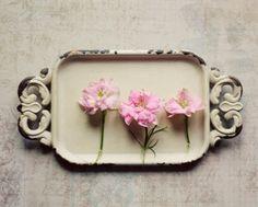 Still life photo pink romantic flower art cream by dullbluelight