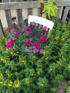 Flowering chair 2015