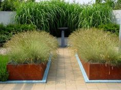 Large containers or raised beds made from CorTen-Steel and planted with only one type of ornamental grass.