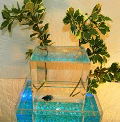 Upside Down Betta Aquarium - 3 gallon capacity 100% fully clear Lucite. $65.00, via Etsy.
