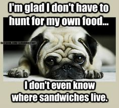 "Figure out additional details on ""black pug puppies"". Take a look at our web site. Funny Dog Memes, Funny Dogs, Funny Sayings, Funny Shit, Funny Stuff, Animal Jokes, Funny Animals, Baby Animals, Animal Humour"