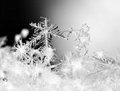 Snowflakes Photo by Isabelle M. -- National Geographic Your Shot