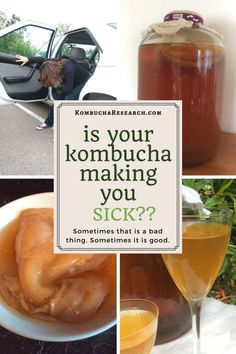 Suspected kombucha allergy or a beneficial detox effect. Kombucha is beneficial for some people, but harmful for others. Kombucha Flavors, Kombucha Recipe, Gut Health, Health And Wellness, Real Food Recipes, Healthy Recipes, Drink Recipes, Healthy Foods, Drink