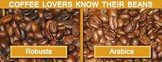 Robusta and Arabica Beans