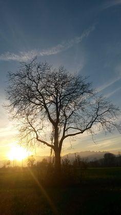 Un albero è solo un albero. O forse no.