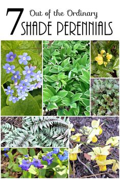 Learn about 7 easy to grow shade loving perennials, a little out of the norm that you will definitely want to add to this years wish list for the garden. #flowersplantsgardens