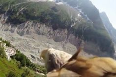 Camera strapped to eagle offers bird's-eye view of nature