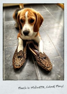 Everyone loves a pair of Belgian Shoes