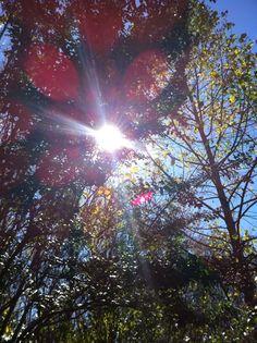 blue sky tree