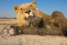 Africa Animals Night Life #4237708, 2800x1900 | All For Desktop