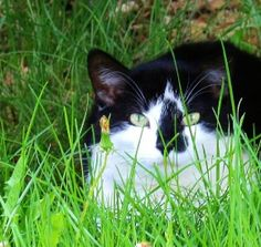 Pretty Kitty                                                             Photo by Betty J Budd