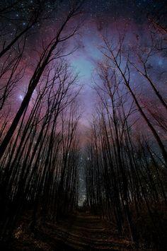 starry night in the woods // nuit étoilée dans les bois Pretty Pictures, Cool Photos, Random Pictures, Pictures Images, Beautiful World, Beautiful Places, Beautiful Sky, Pretty Sky, Beautiful Scenery