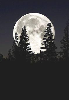 Moon Set at Mammoth Lakes Moon Photography, Landscape Photography, Mammoth Lakes, Moon Pictures, Full Moon Photos, Beautiful Moon, Beautiful Forest, Moon Art, Galaxy Wallpaper
