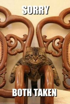 lolcatchair