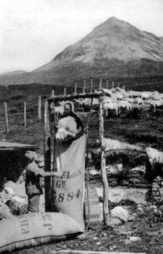Old photograph of a crofter packing wool at Portnalong, Isle of Skye, Scotland