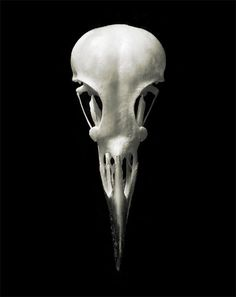 blanc | white | bianco | 白 | belyj | gwyn | color | texture | form | Silky Starling Bird Skull 8x10