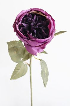 Add long-lasting color, texture, and a rich violet purple hue to any arrangement or DIY with this silk English Cabbage Rose. Violet Purple Tall x Bloom Silk