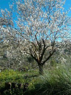 Spring in Lebanon.