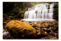 Liffey Falls, Liffey, Tasmania