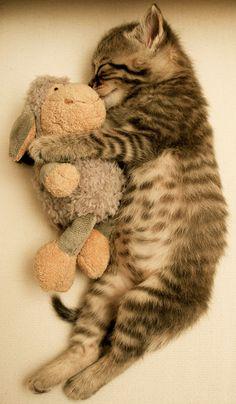 Fluffy friend