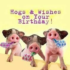Hogs and wishes on your birthday! Birthday Cards For Him, Bday Cards, Funny Birthday Cards, Birthday Greetings, Birthday Memes, Birthday Signs, Happy Bday Wishes, Happy Birthday Quotes, Birthday Wishes